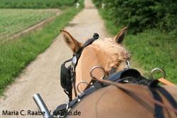"""Kutschfahrt durch den """"Bornwald"""""""