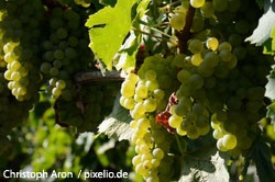 Köstlichkeiten des Burgenlandkreises